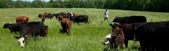 Hydroponics and Grass Fed Beef Tours July 28 near Chamberlain