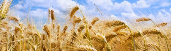 Stengel Seed & Grain Company