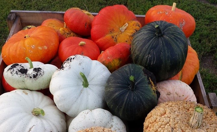 Organic Seed Processing & Pumpkin Patch Tours Sept. 13 in Milbank