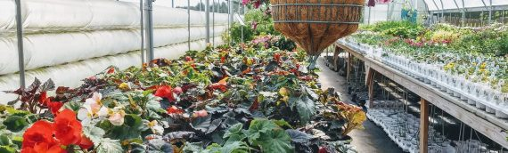 Nursery and Growing for Health Tours Aug. 9 in Custer