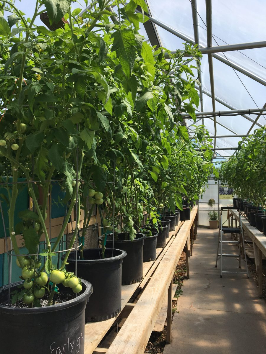 Producer Feature: Dakota Greens- Custer Greenhouses & Nursery, Inc.