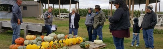 Big Stone Pumpkin Patch Showcases Farming with Entertainment