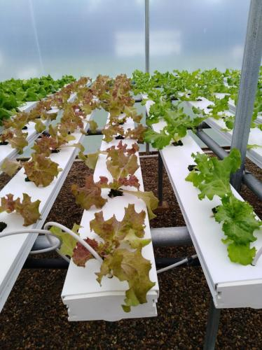 SDSPA Tour 2019- Happy Hydros, Hydroponic Lettuce Production.