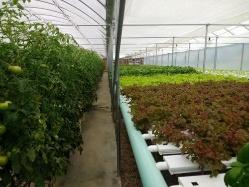 SDSPA Tour 2019- Happy Hydros, Hydroponic Production.