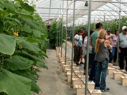 SDSPA Tour 2019- Happy Hydros, Hydroponic Cucumber Production.