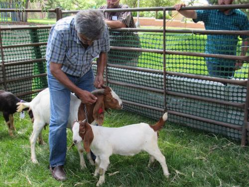 Meat & Dairy Goats Workshop 2018