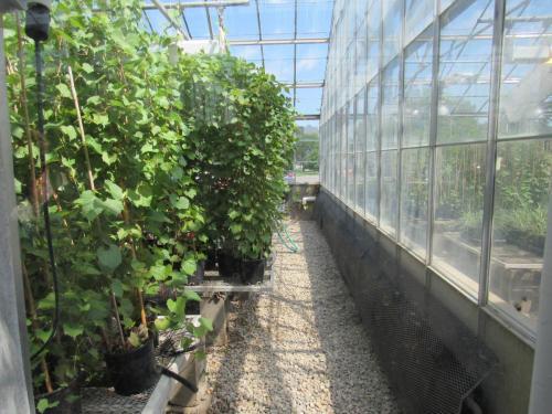 2017 SDSPA Tour- SDSU Greenhouses
