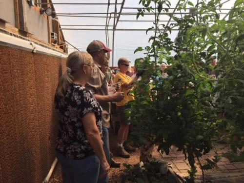2017 SDSPA Tour- Tomatoes at Brimm's
